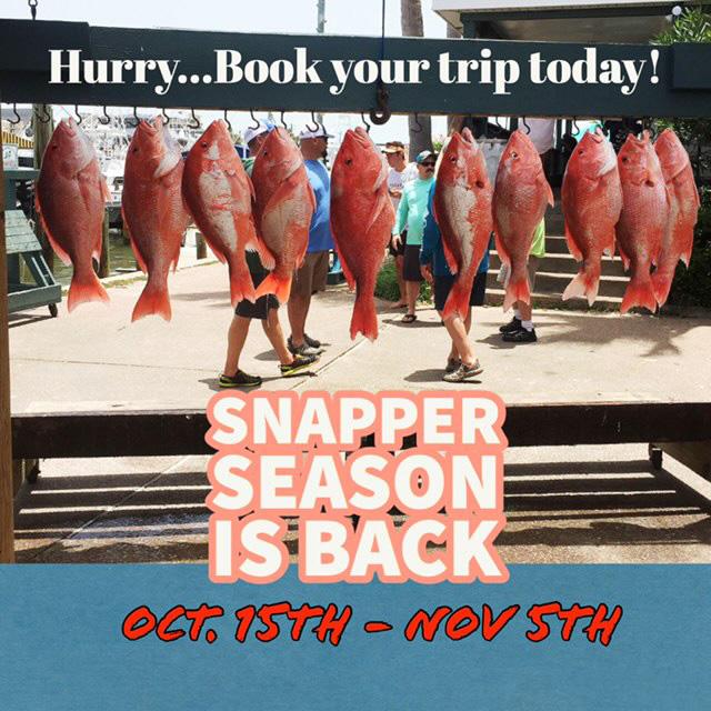 Snapper Season Is Back